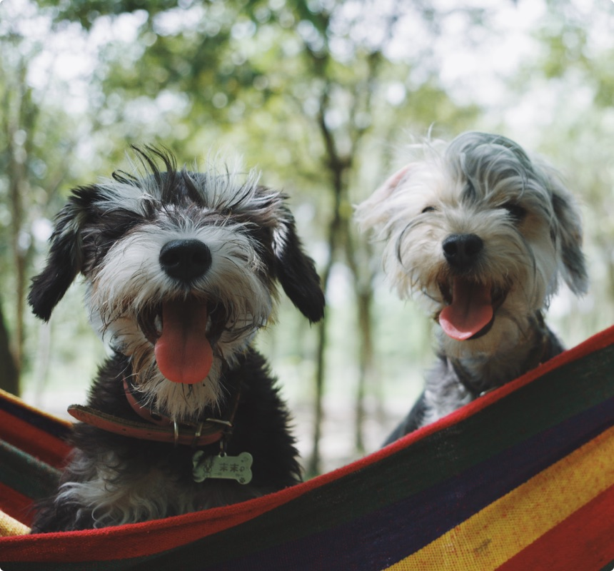 Dog Sitters For a  Stress-Free Experience